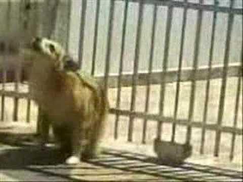 cachorro dançando dança do creu