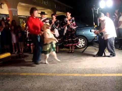 Salsa Dancing Dog.mp4