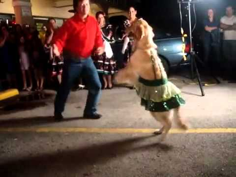 Dancing salsa dog only 1yr of preparation(full video quality)