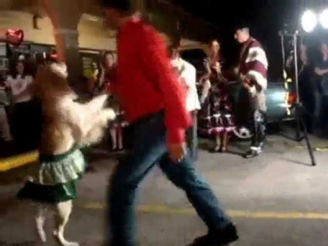Salsa Dancing Dog Halloween Costumes