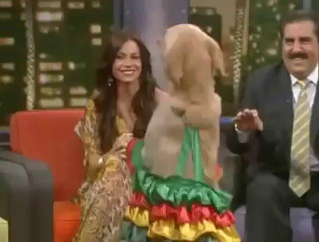 Amazing dog dancing salsa!
