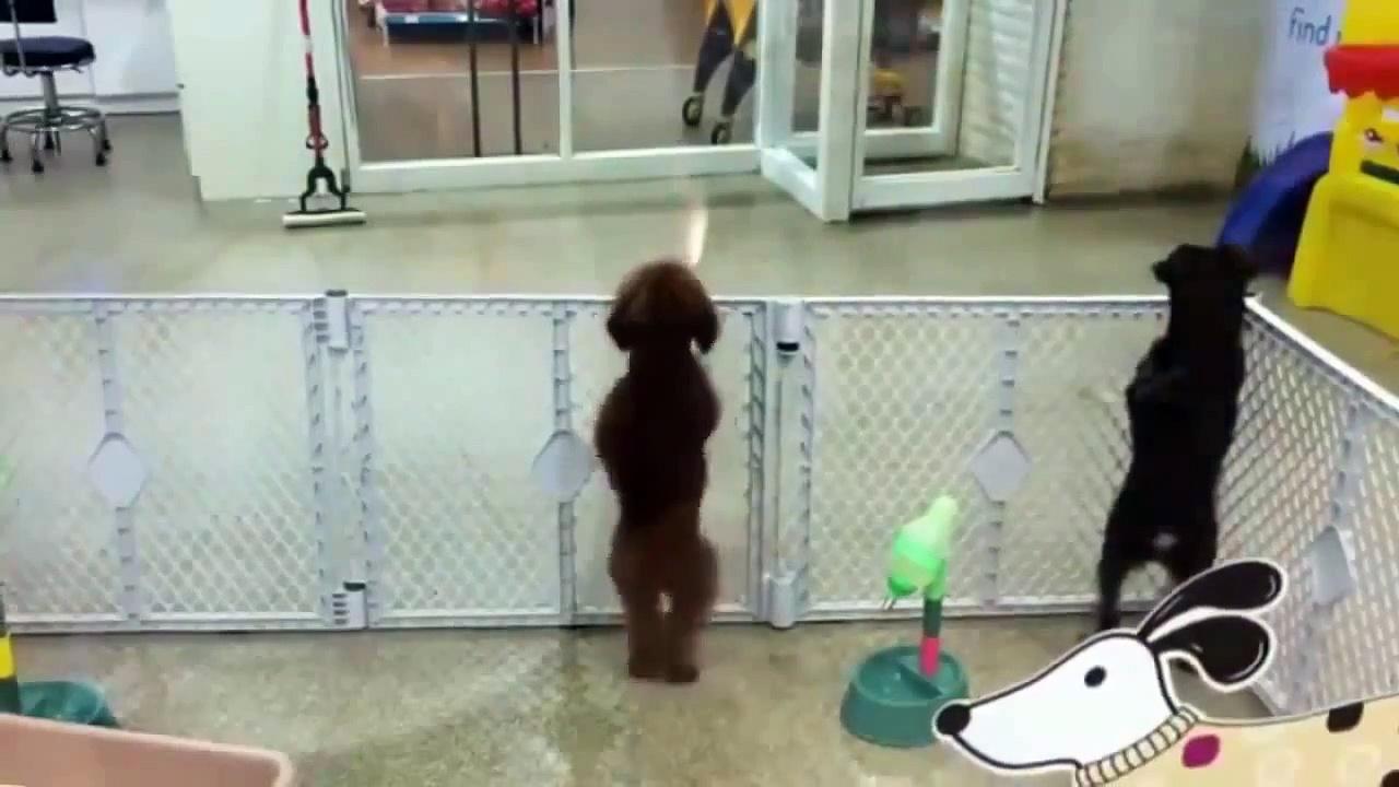 Cute DOG Dances to Salsa Music