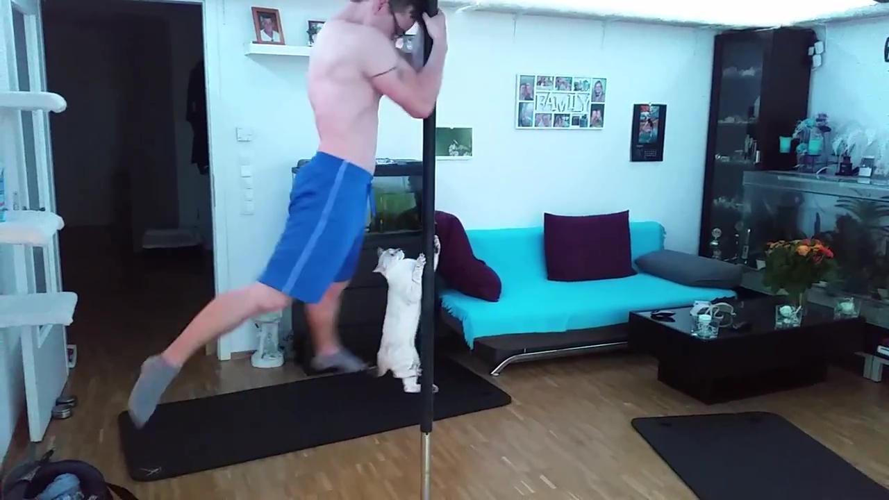 Chat fait du pole dance